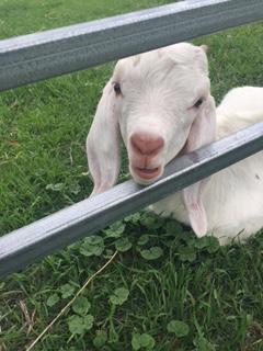 Farm Photo 1